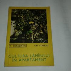 T.BORDEIANU \ GH.STANCIU - CULTURA LAMAIULUI IN APARTAMENT - Carte gradinarit