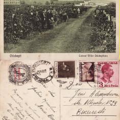 Odobesti ( Focsani, Vrancea )-Culesul viilor Odobestianu-rara - Carte Postala Moldova 1904-1918, Circulata, Printata