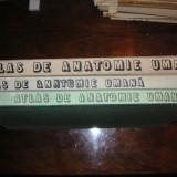 Atlas de anatomie umana - Mircea Ifrim (vol I, ll, lll)