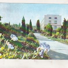 Bnk cp Cluj Napoca - Gradina botanica - circulata - Carte Postala Transilvania dupa 1918, Printata