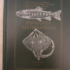 RWX 20 - ZOOLOGIA VERTEBRATELOR - GROSSU - 1974 - Curs Medicina