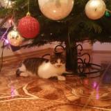 Pisicuta cuminte si dulce/Adoptie