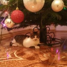 Pisicuta cuminte si dulce/Adoptie - Pisica de vanzare