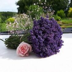 Lavanda : buchete, saculete aromatice, flori uscate vrac