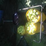 Pălincă de mere