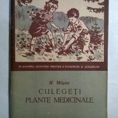 M. Milstoc - Culegeti plante medicinale