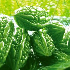 Castravete amar 50 seminte
