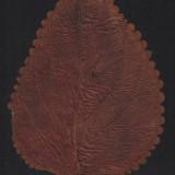 Frunză presată de acum cca 50 ani