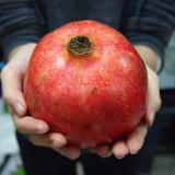 Seminte rare - Rodie uriasa Ambrosia - 3 seminte pt semanat