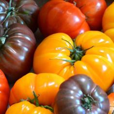Semințe de roșii - 220 de semințe - 11 soiuri - Seminte rosii