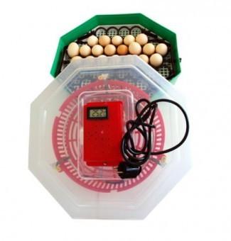 Incubator cu dispozitiv întoarcere oua si termometru CLEO 5DT foto