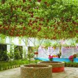 Rosii italiene Cherry Tree - productivitate mare - 5 seminte pt semanat - Seminte rosii