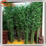 Seminte rare de Palmier Bambus Bamboo Palm- 3 seminte pt semanat