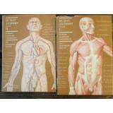 HUMAN ANATOMY - M. PRIVES 2 VOLUME