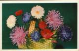 CP Rusia ,necirc - Felicitare - Flori, Necirculata, Fotografie