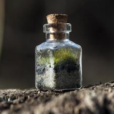 Mini micro ecosisteme sticla