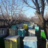Vand 100 familii de albine