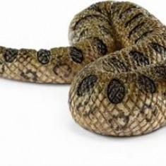 Figurina Schleich - Anaconda Verde - Sl14778 - Figurina Animale