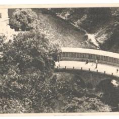 Baile Herculane 1951 - vedere - Carte Postala Banat dupa 1918