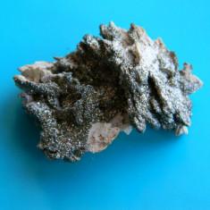 Specimen minerale - pirita pe calcita - Fosila roca