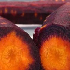 Seminte de morcovi- Purple Dragon. - Legume