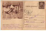 CPI (B8073) CARTE POSTALA - CRESTEREA PASARILOR DE RASA, GAINI, Circulata, Fotografie