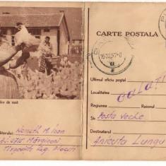 CPI (B8073) CARTE POSTALA - CRESTEREA PASARILOR DE RASA, GAINI - Carte Postala Muntenia dupa 1918, Circulata, Fotografie