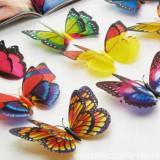 Fluturi decorativi 3 D cu magnet