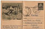 CPI (B8074) CARTE POSTALA - CRESTEREA PASARILOR DE RASA, GAINI, Circulata, Fotografie