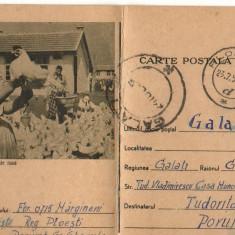 CPI (B8074) CARTE POSTALA - CRESTEREA PASARILOR DE RASA, GAINI - Carte Postala Muntenia dupa 1918, Circulata, Fotografie