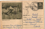 CPI (B8075) CARTE POSTALA - CRESTEREA PASARILOR DE RASA, GAINI, Circulata, Fotografie