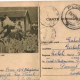 CPI (B8075) CARTE POSTALA - CRESTEREA PASARILOR DE RASA, GAINI