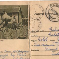 CPI (B8075) CARTE POSTALA - CRESTEREA PASARILOR DE RASA, GAINI - Carte Postala Muntenia dupa 1918, Circulata, Fotografie
