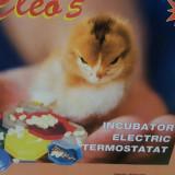 Clocitoare / Incubator oua