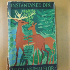 Instantanee din viata animalelor Ionel Pop Bucuresti 1964