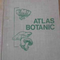 Atlas Botanic - Lucia Popovici Constanta Moruzi Ion Toma, 392295 - Carti Agronomie