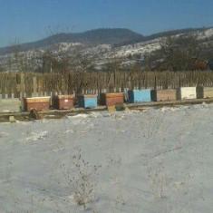 Vând stupi de albine în stare bună