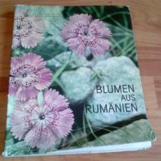 BLUMEN AUS RUMANIEN -DR. MIRCEA BICHICEANU -RODICA RARAU-BICHICEANU - Carte in germana