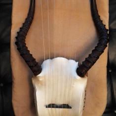 Harpa muzicala - model african