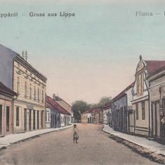 LIPOVA ARAD SALUTARI DIN LIPOVA STRADA PRINCIPALA MAGAZINE - Carte Postala Crisana dupa 1918, Necirculata, Printata