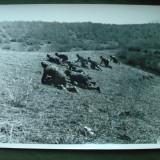Foto militara ROMANIA Regalista, soldati vanatori de munte in atac pe front/URSS - Fotografie veche