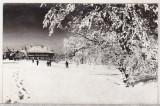 Bnk cp Muntele Semenic - Peisaj de iarna - necirculata, Printata