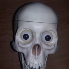 Craniu pvc, identic cu originalul, cu ochi/dantura/creier, didactic - sculptura reproducere