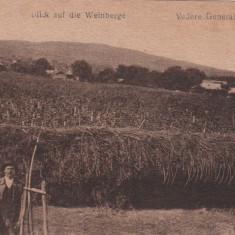 ODOBESTI VEDERE GENERALA A VIILOR - Carte Postala Moldova dupa 1918, Necirculata, Printata