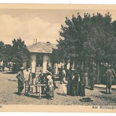 1106 - Vrancea, FOCSANI, Market - old postcard - unused - Carte Postala Moldova 1904-1918, Necirculata, Printata