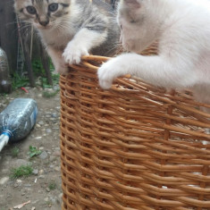Ofer spre adopție 6 pisoi drăgălaşi - Pisica de vanzare