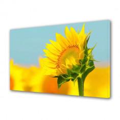 Tablou Canvas Pui de floarea soarelui