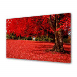 Tablou Canvas Covor rosu sub copac