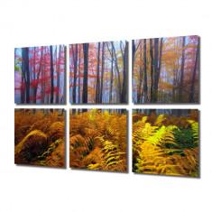 Tablou Multicanvas 6 Piese Veriga in padure - Tablou canvas