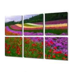 Tablou Multicanvas 6 Piese Campii in Olanda